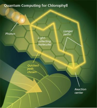 Aspetti biologici della fisica quantistica